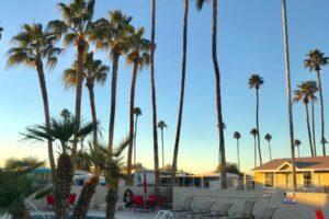hot tub pool chairs palm trees